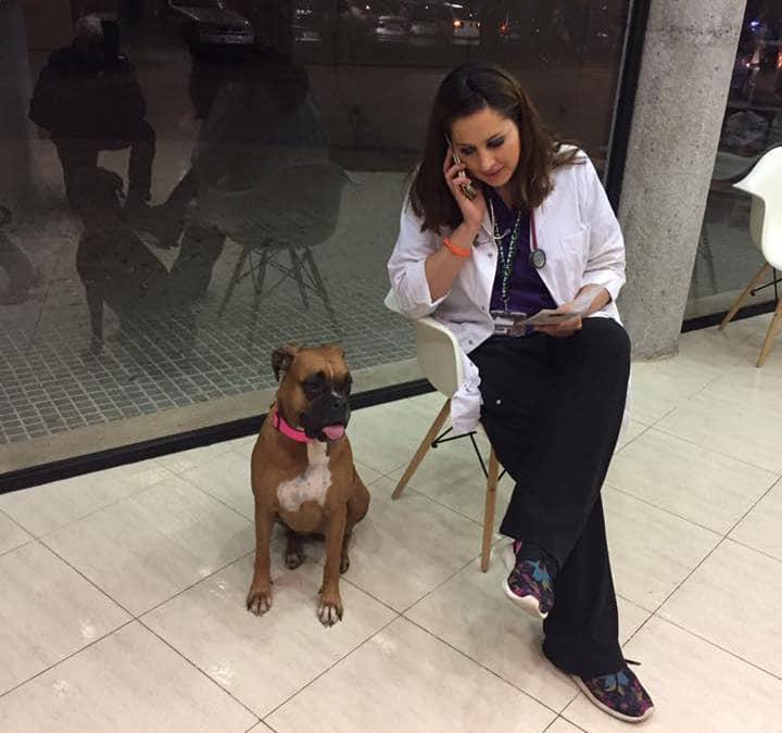 Núria Querol Viñas: «El perro también es víctima de la violencia machista»