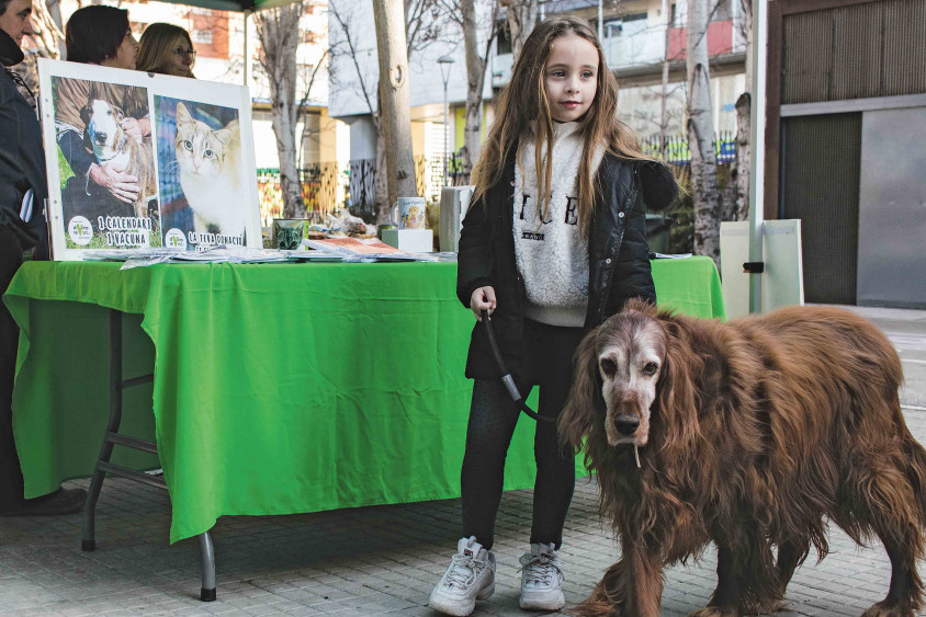 Red Solidaria Pro Animal se suma al programa VioPet que busca cases d'acollida per les mascotes de víctimes del masclisme