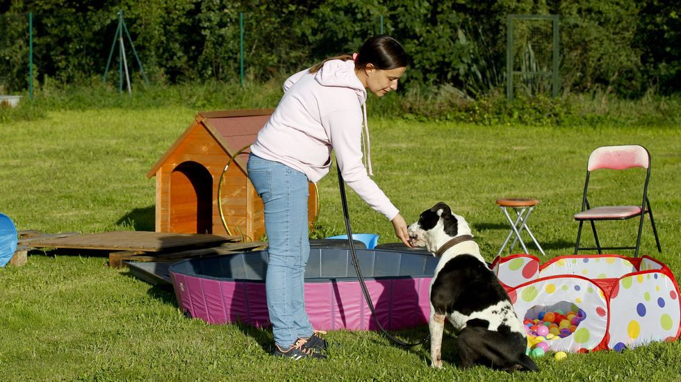 Loreto Corral: «Cuidamos las mascotas de quienes están en la primera línea contra el coronavirus» La residencia canina Cangal, en Santiago, también acoge animales de víctimas de violencia de género