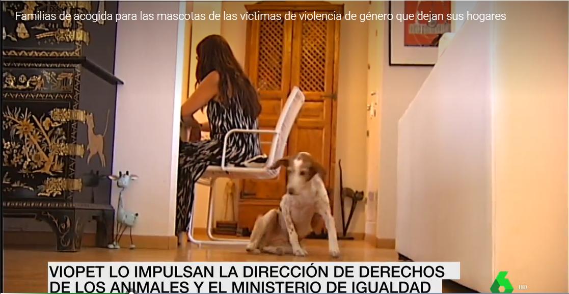 Familias de acogida para las mascotas de las víctimas de violencia de género que dejan sus hogares